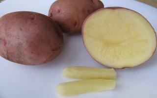 Лечение геморроя картофелем: рецепты