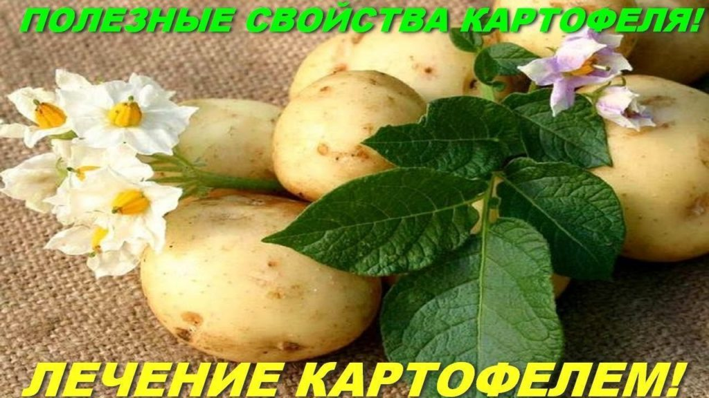 Картофель в лечении недугов