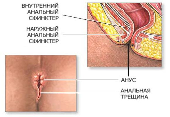 Схема ануса человека